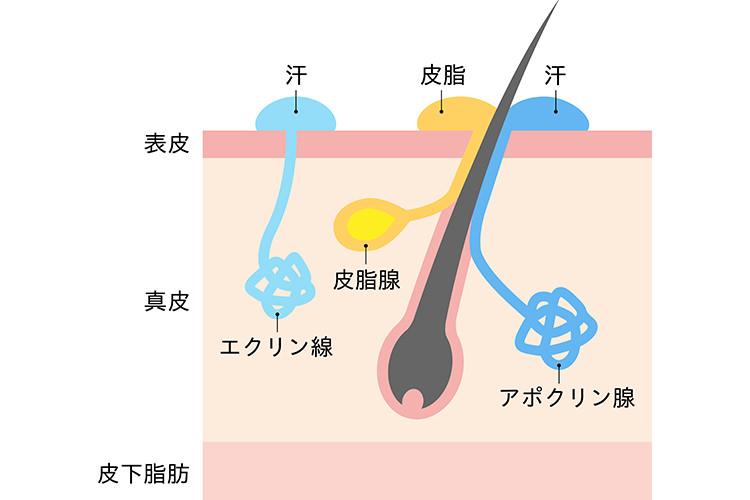 汗 を か かない 病気 病気のサインかもしれない汗のかき方 寒気&冷や汗は低血糖の恐れ